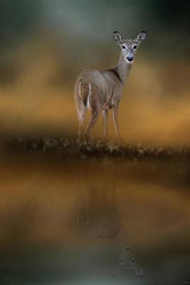Photograph - Sunrise At The Pond by Jai Johnson
