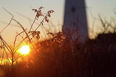 Photograph - Sunrise Backlight by Darryl Hendricks