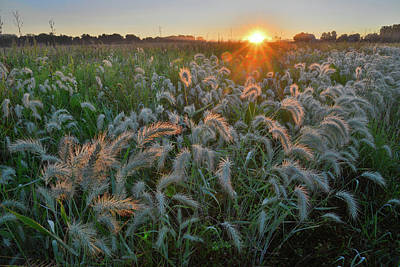Photograph - Sunrise Backlights Fox Tails In Glacial Park by Ray Mathis
