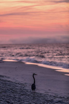Print featuring the photograph Sunrise Beach And Bird by John McGraw