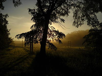 Photograph - Sunrise Behind Elm Tree by Kent Lorentzen