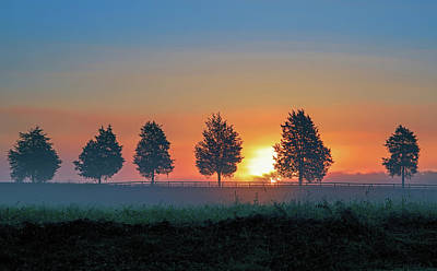 Everything Batman Rights Managed Images - Sunrise behind the Cedars Royalty-Free Image by Lori Coleman