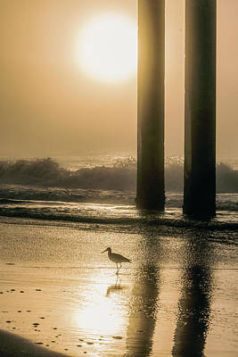 Print featuring the photograph Sunrise Bird At Beach  by John McGraw