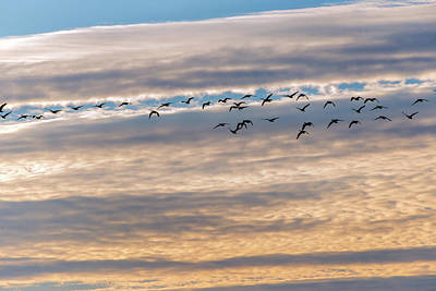 Photograph - Sunrise Birds by Kimberly Rentler
