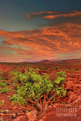 Photograph - Sunrise Capitol Reef National Park Utah  by Dave Welling