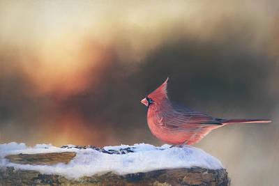 Sunrise Cardinal Art Print by Barbara Hymer
