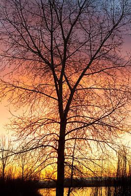 Sunrise December 16th 2010 Art Print by James BO  Insogna
