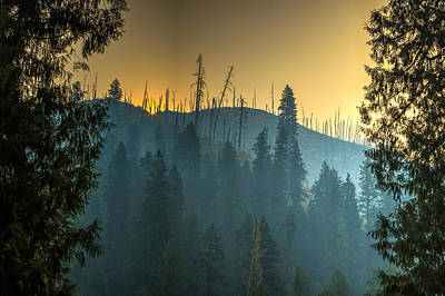Photograph - Forest Fire Sunrise by Brad Stinson