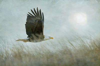 Photograph - Sunrise Eagle by Angie Vogel
