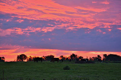 Photograph - Sunrise Feeders by Bonfire Photography