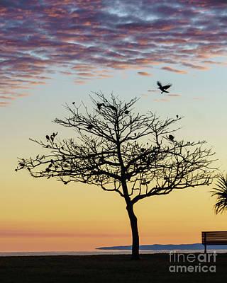 Photograph - Sunrise Flight by Silken Photography