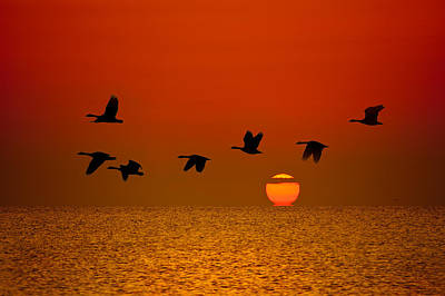 Goose Photograph - Sunrise Flight by Steve Gadomski