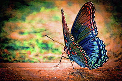 Photograph - Sunrise Flutter by Lesa Fine