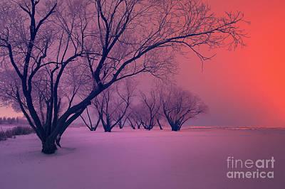 Sunrise Fog Art Print by Ian McGregor