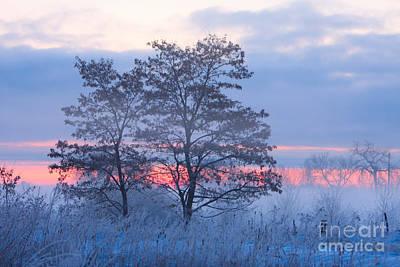 Sunrise Fog Art Print by James BO  Insogna