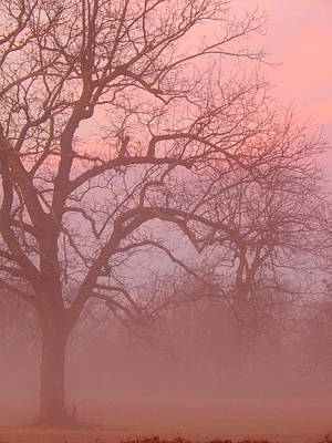 Photograph - Sunrise Fog by Virginia Kay White