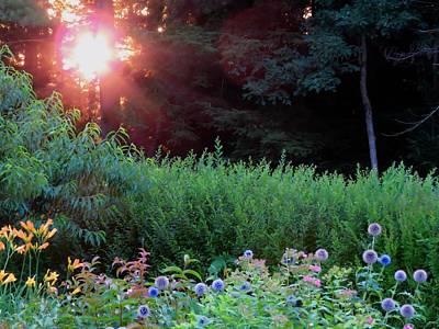 Photograph - Sunrise Garden by MTBobbins Photography