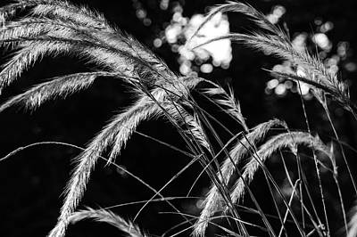 Photograph - Sunrise Grasses by Glenn DiPaola