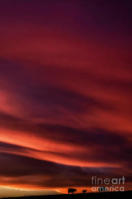 Photograph - Sunrise Grazing Red Sky Morning by Thomas R Fletcher