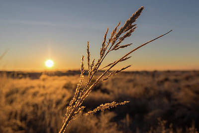 Photograph - Sunrise Illuminates Winter Grass by Tony Hake