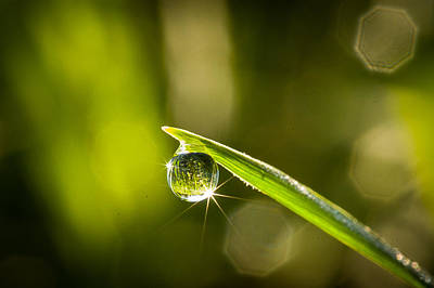 Photograph - Sunrise In A Dewdrop by Monte Stevens