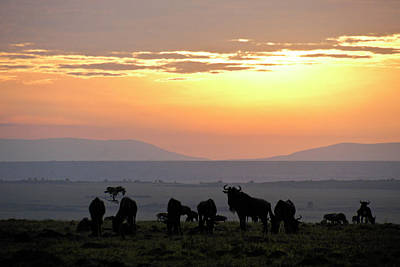 Photograph - Sunrise In Africa by Michele Burgess