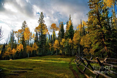 Photograph - Sunrise In Aspens by David Arment