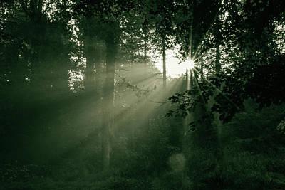 Photograph - Sunrise In Forest by Jacek Wojnarowski