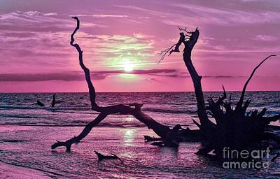Photograph - Sunrise In Purple Hues by Paulette Thomas
