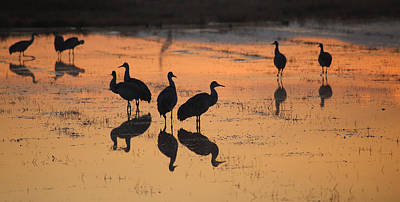 Photograph - Sunrise In The Bosque by Jean Clark