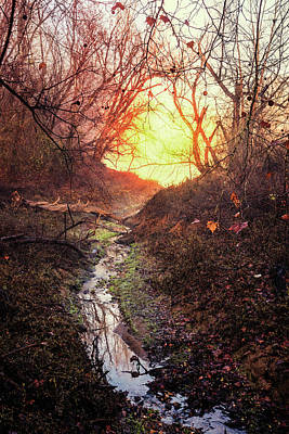 Photograph - Sunrise In The Forest by Debra and Dave Vanderlaan