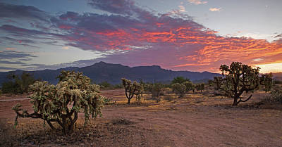 Photograph - Sunrise In The Sonoran Desert by Sue Cullumber