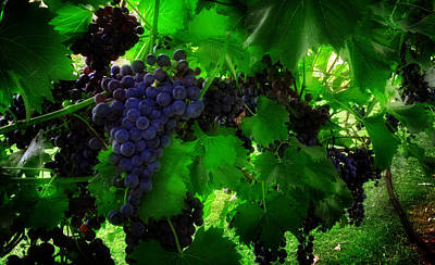 Grape Leaves Photograph - Sunrise In The Vineyard by Greg Mimbs