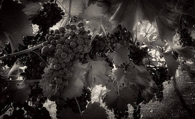 Grape Leaves Photograph - Sunrise In The Vineyard In Black And White by Greg Mimbs