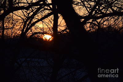 Photograph - Sunrise In The Woods by Mark McReynolds