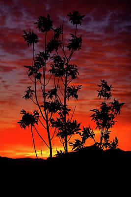 Photograph - Sunrise Magic by Paul Marto