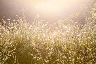 Photograph - Sunrise Meadow by Steven Green