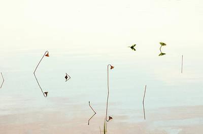 Photograph - Sunrise Minalism by Carolyn Dalessandro