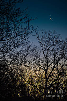 Photograph - Waning Crescent At Sunrise by Amy Porter