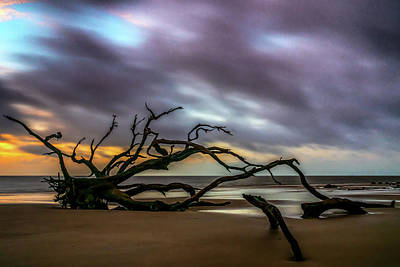 Photograph - Sunrise On Driftwood Beach, Jekyll Island, Ga by Michael Sussman