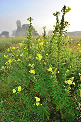 Photograph - Sunrise On Glacial Park Prairie Wildflowers by Ray Mathis