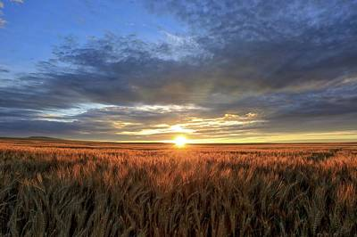 Photograph - Sunrise On Horse Heaven Wheat by Lynn Hopwood