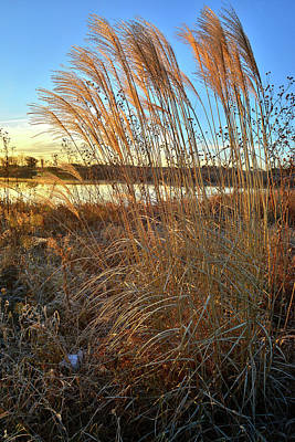 Photograph - Sunrise On Pampas Grass In Lakewood by Ray Mathis