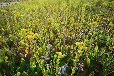 Photograph - Sunrise On Pleasant Valley Wildflowers by Ray Mathis