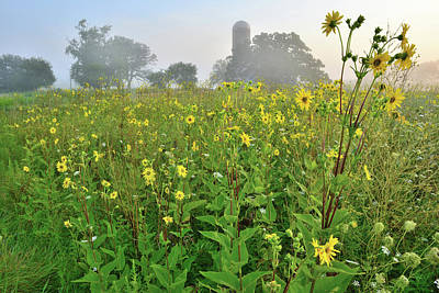 Photograph - Sunrise On Sunflowers At Glacial Park by Ray Mathis