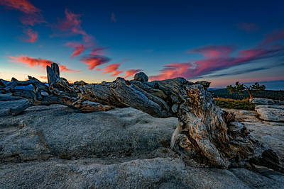 Photograph - Sunrise On The Jeffrey Pine by Rick Berk