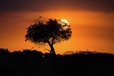 Photograph - Sunrise On The Mara by Tim Stanley