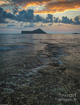 Photograph - Sunrise On The Reef by Mitch Shindelbower