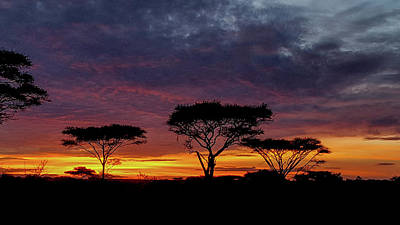 Photograph - Sunrise On The Serengeti by Marilyn Burton