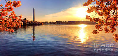 Photograph - Sunrise On The Tidal Basin by Olivier Le Queinec